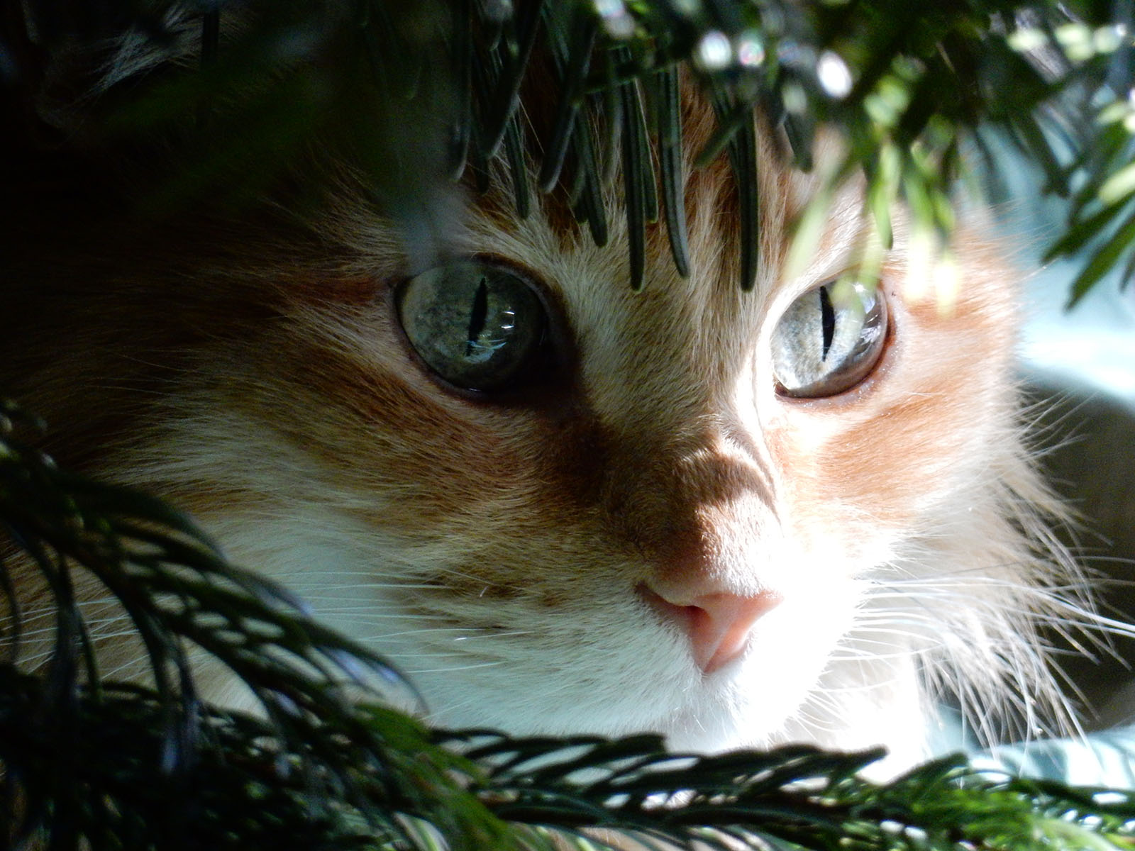 Andy took this picture of Sean under the Christmas tree in December of 2015.